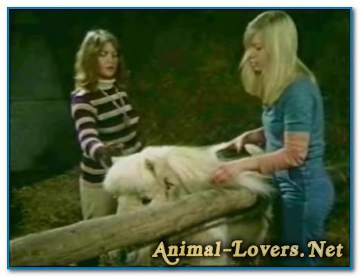 Bodil Joensen - Animal Sex Pornstars - Bodil And Pony