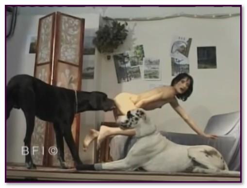 088-Doggy-Time-1.jpg