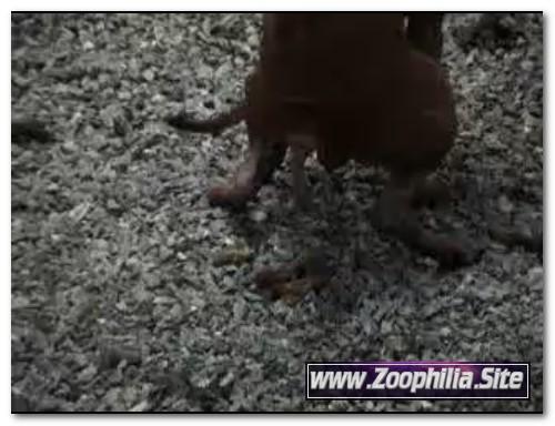 103 - Zoo Scat