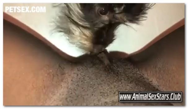 Amateur ZooSex - Part 2 Puppy Eat Virgin Black Pussy